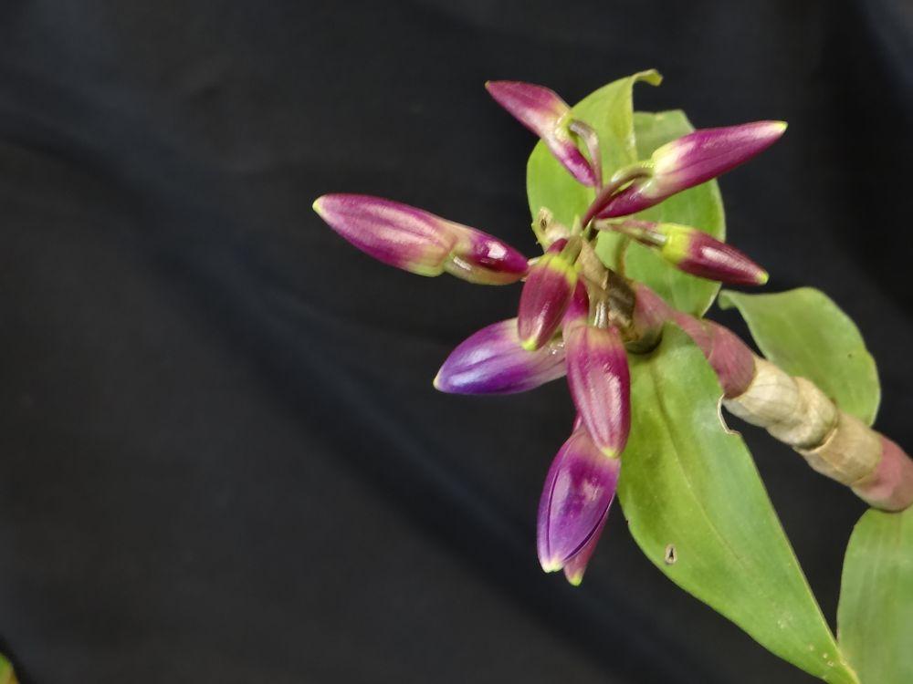 Photo in Macro #exposición #orquídeas #guatemala #flores