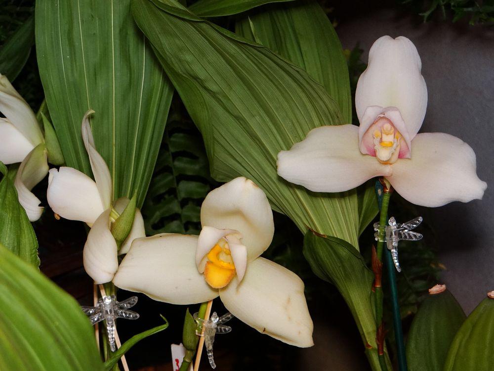 Photo in Macro #orquídeas #flores #fantasía