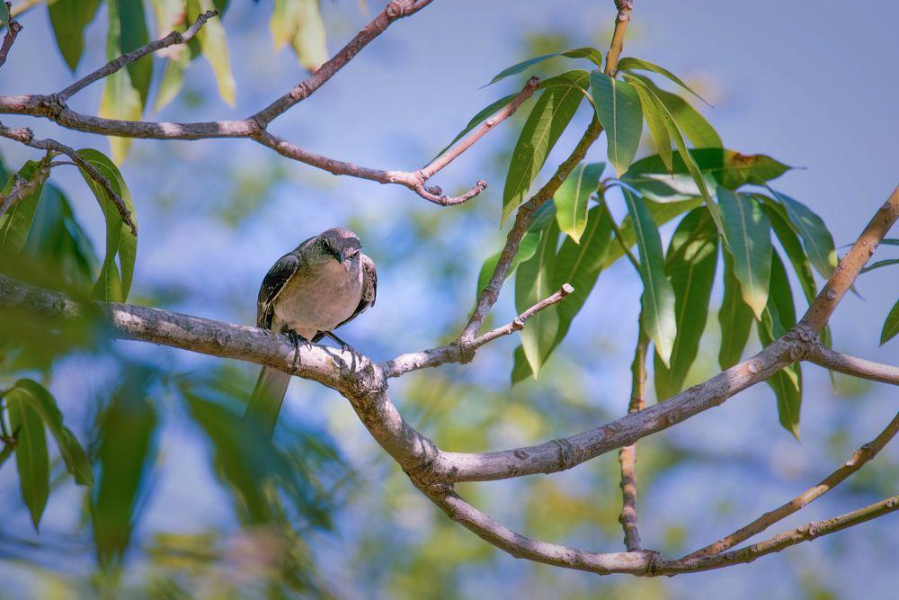 Photo in Animal #animal #bird #otdoors #tree #branches #sky #natural light