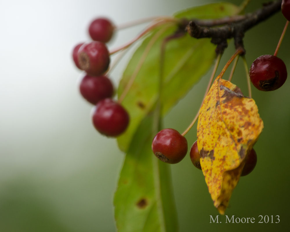 Photo in Nature #leaf #berries #fall #colors #autumn #brokeh #nikon #d5100