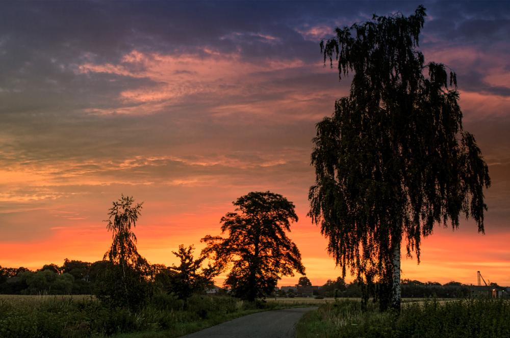 Photo in Landscape #morning #sunrise #road #tree #colors