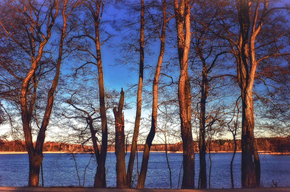 Photo in Landscape #lake #trees #winter