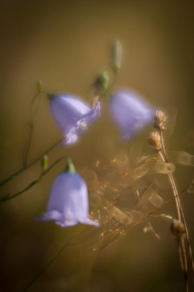 Photo in Nature #lensbaby #velvet 56