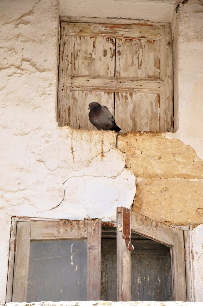Photo in Random #bird #window #italy #matera