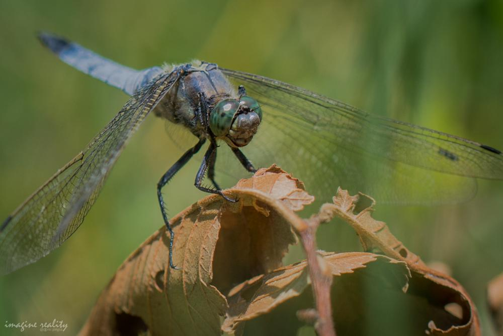 Photo in Animal #dragonfly