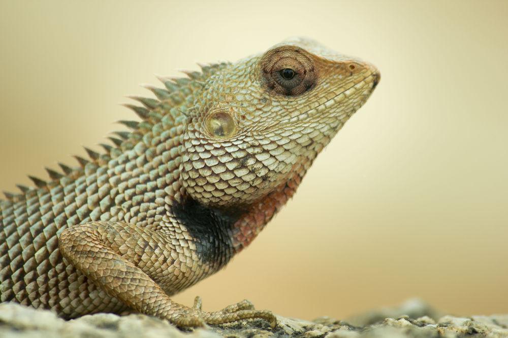 Photo in Animal #animal #wild
