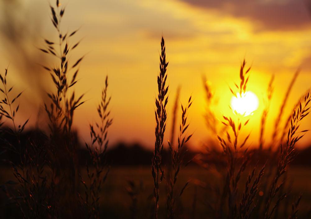 Photo in Nature #summer #sunset #grass #warm #nature #art #sunlight #sunrise #nature picture #land #landscapes
