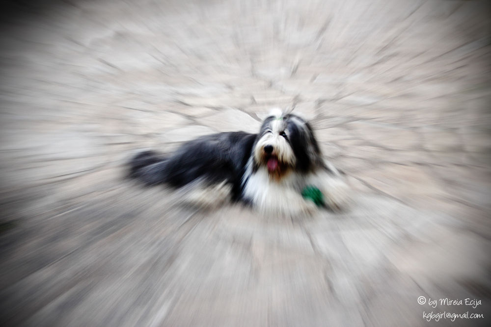 Photo in Random #dog #dogs #zooming