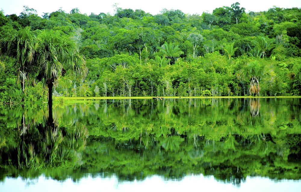 Photo in Nature #nature #reflex #amazon #rain forest