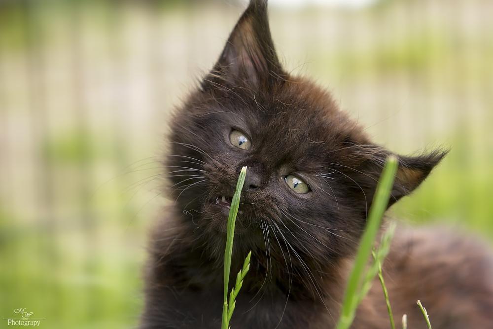 Photo in Animal #cat #kitten