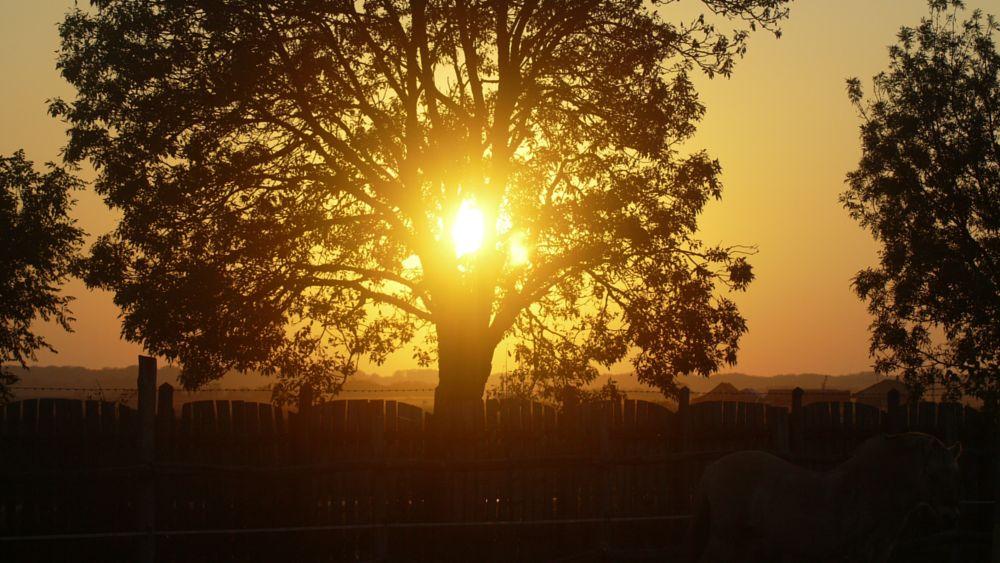 Photo in Landscape #sunset #tree #fence #horse