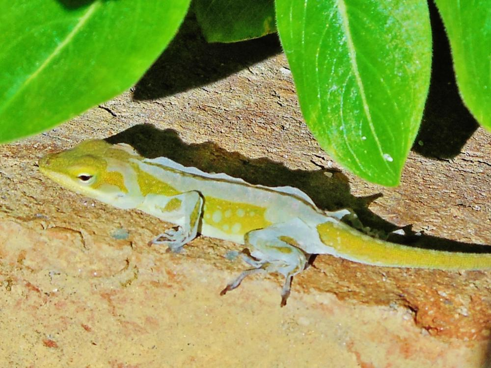 Photo in Nature #animal #lizard #macro