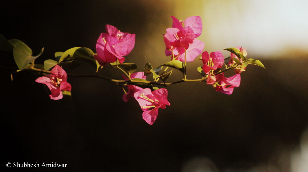 Photo in Nature #ypa2013 #flowers #nature #pink #leaves #spring