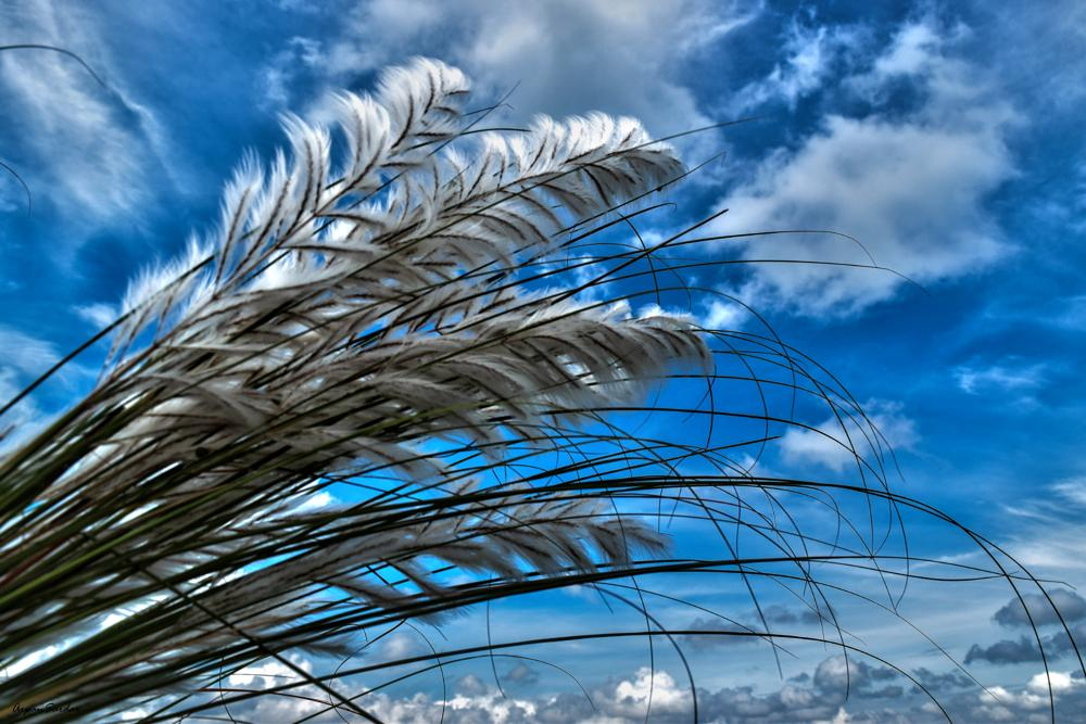 Photo in Nature #autumn #flower #flora #nature #sky #blue #closeup #skyscape