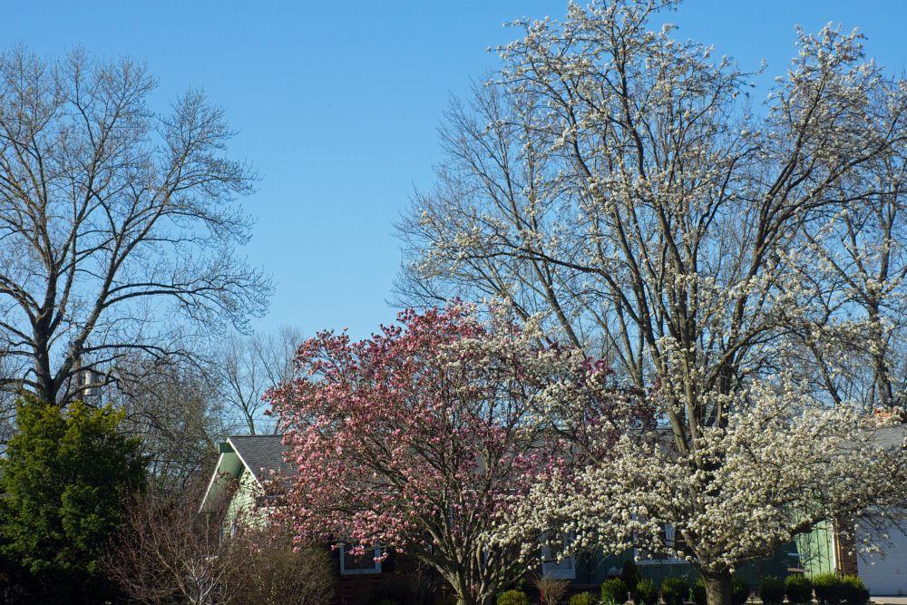 Photo in Landscape #flowers #trees