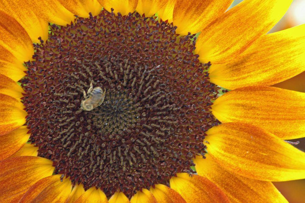 Photo in Nature #wildflower