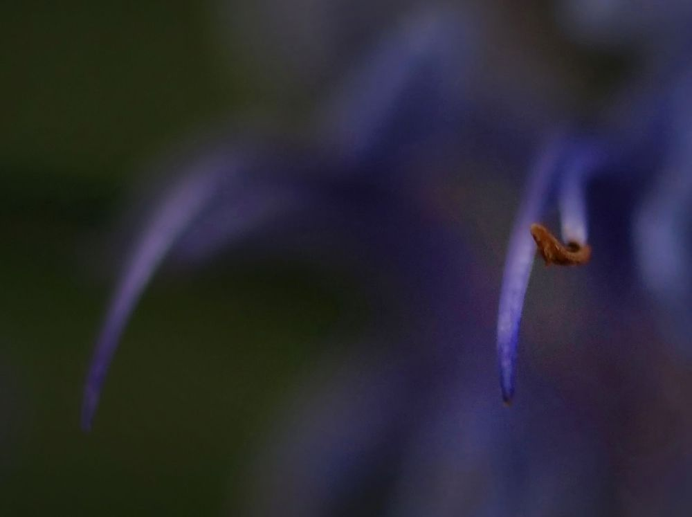 Photo in Abstract #wild #flower #abstract