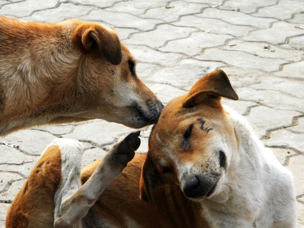 Photo in Animal #https://www.facebook.com/pages #http://yourshot.nationalgeogra #https://plus.google.com/u/0/