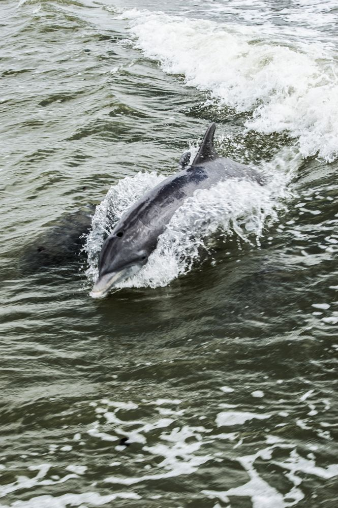 Photo in Animal #dolphin #mammal #nature photography #wildlife photography #tim hauser photography