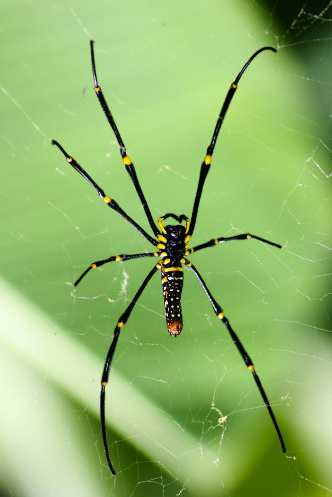 Photo in Random #spider #tamron 70-300mm #canon