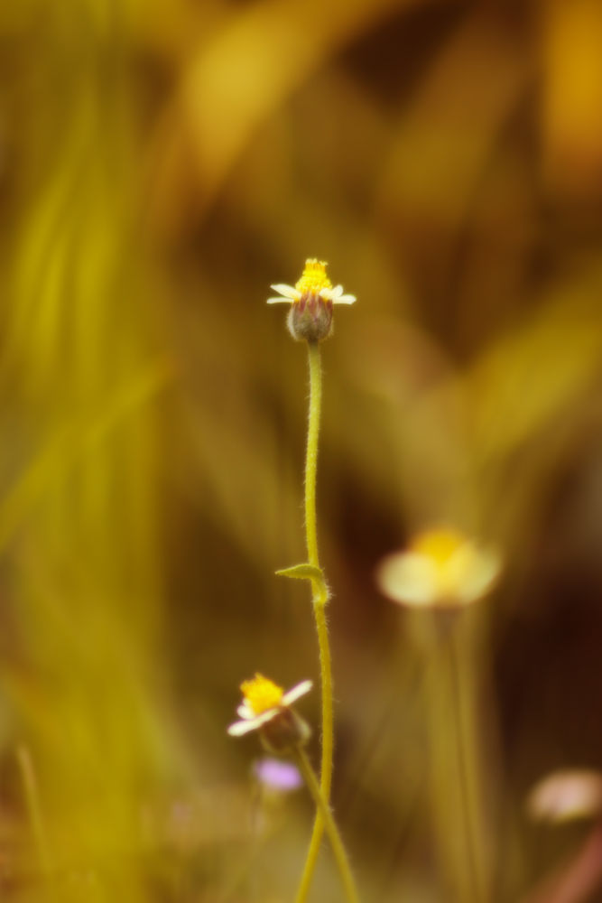 Photo in Nature #canon #tamron 70-300mm #flower