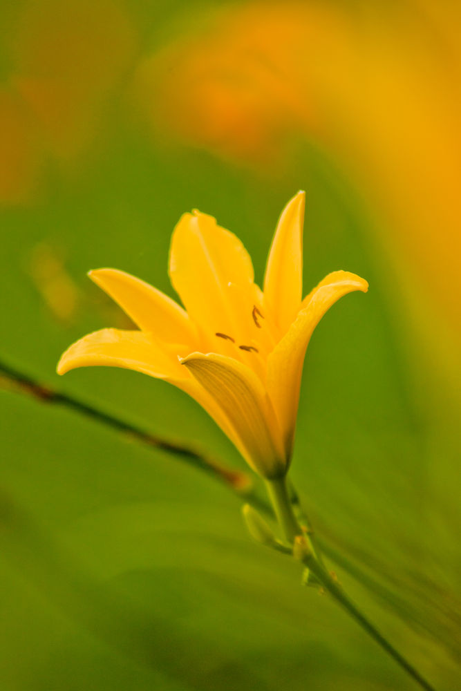 Photo in Nature #flowers #yellow #canon #70-300mm