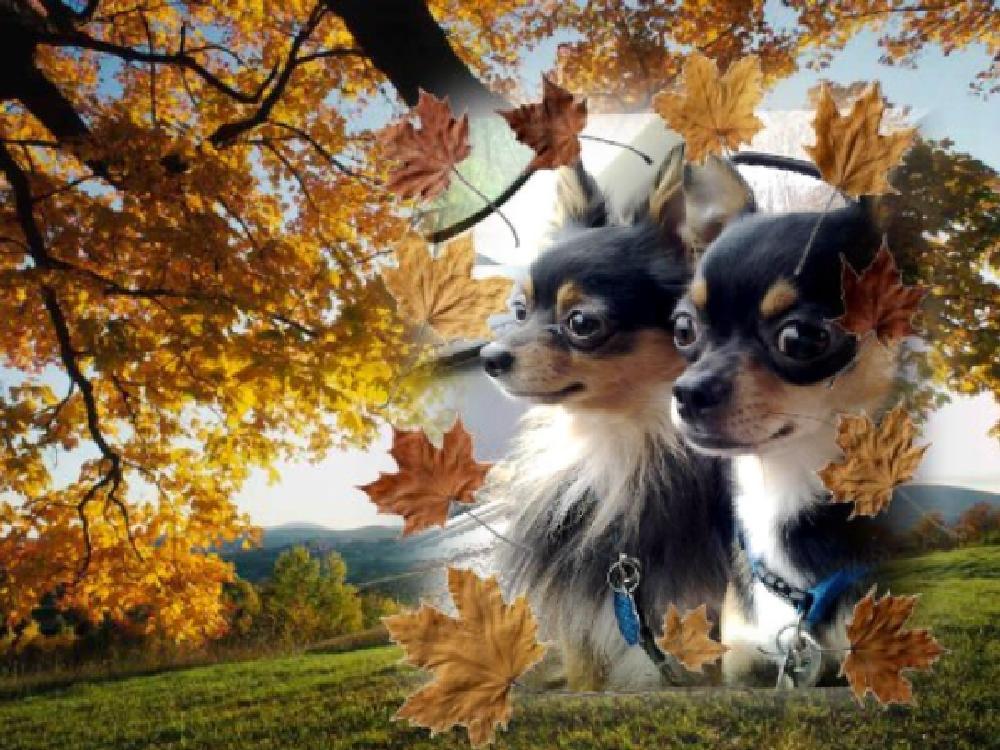 Photo in Animal #hutta #tiny #fall #kentucky