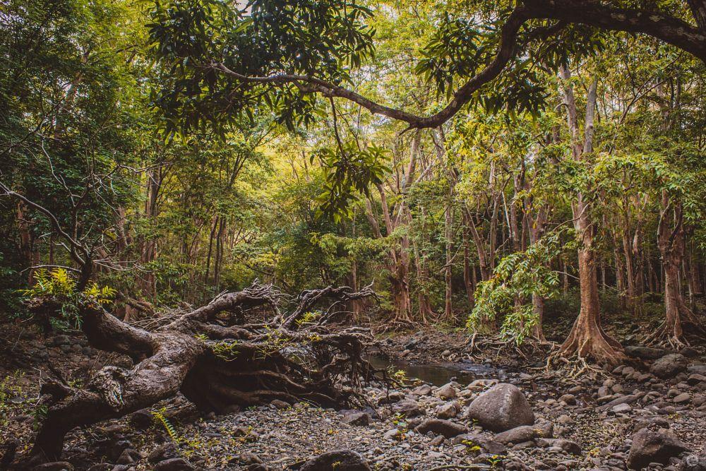 Photo in Nature #nature #lovenature #landscape #green #trees #popular #river #water #riverside #waterfall #peace #love #vides #mauritius #islandlife #island #rock