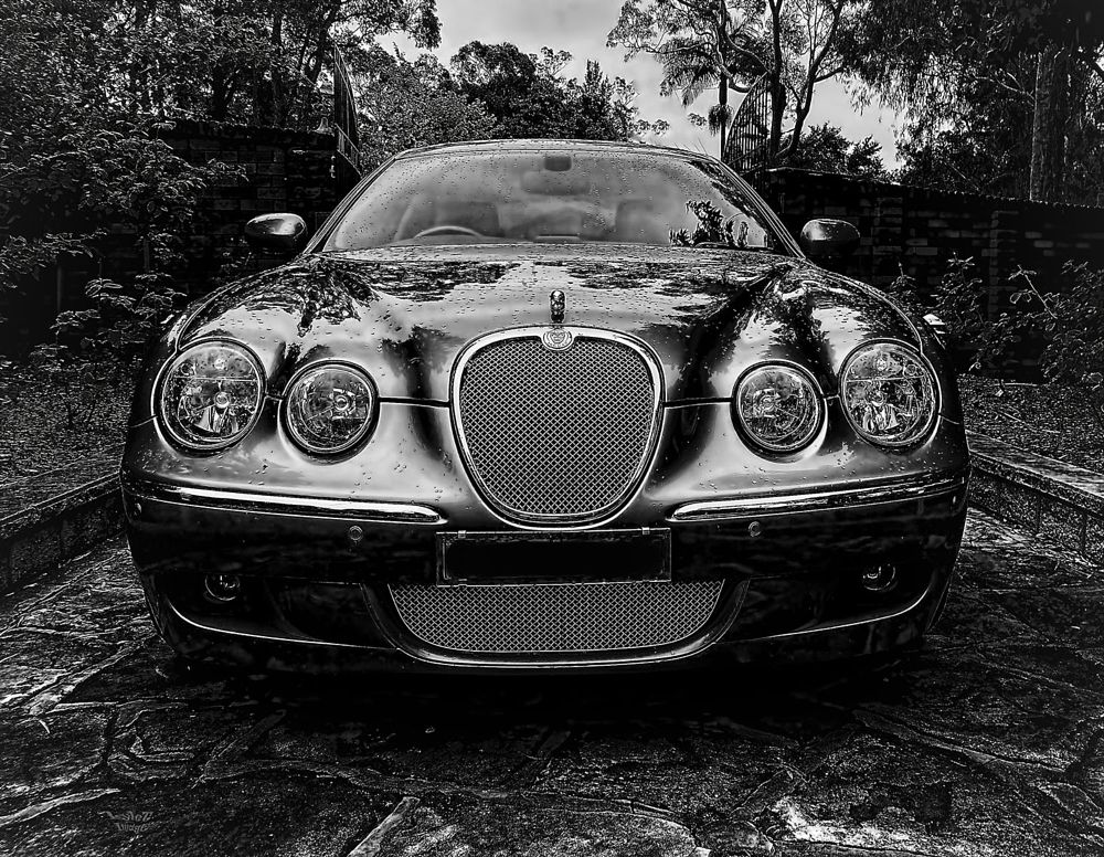Photo in Black and White #jaguar #monochrome #b&w