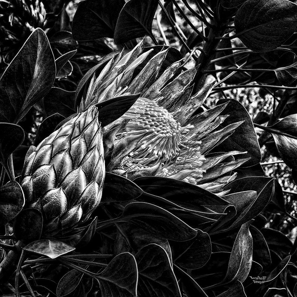 Photo in Black and White #monochrome