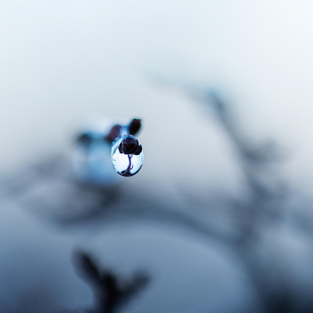 Photo in Macro #winter #droplet #water #nature #macro #dof