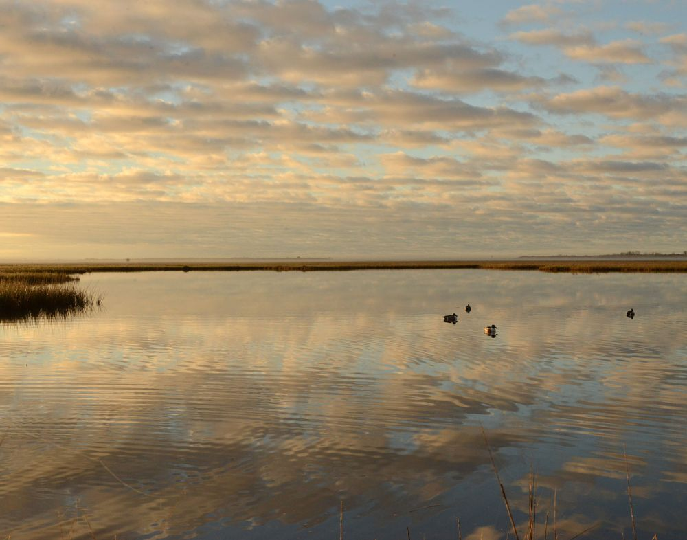 Photo in Nature #hunting #pond #clouds #reflection #horizon