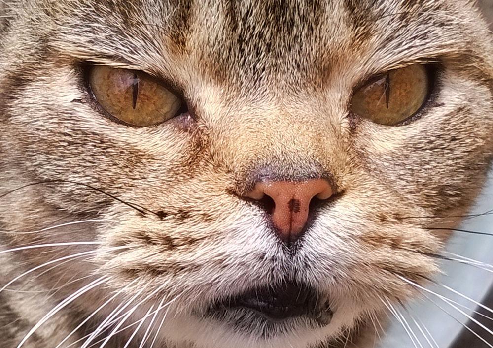 Photo in Animal #cat #eyes