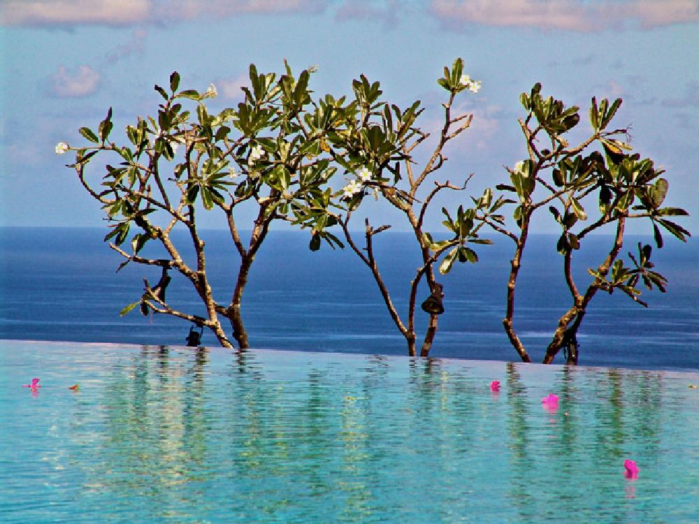 Photo in Nature #nature #travel #bali #swimming pool #sky #sea #relaxing #flowers #colour #beautiful