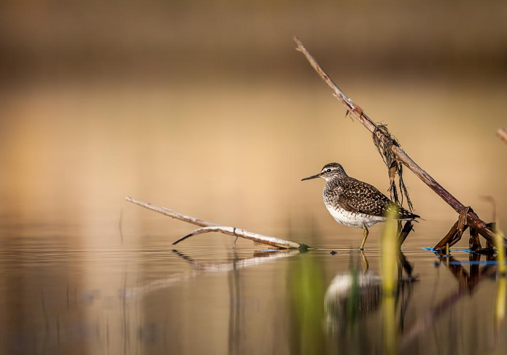 Photo in Nature #bird #nature #animal #water #sweden #nikon #strixphoto #scania #skåne