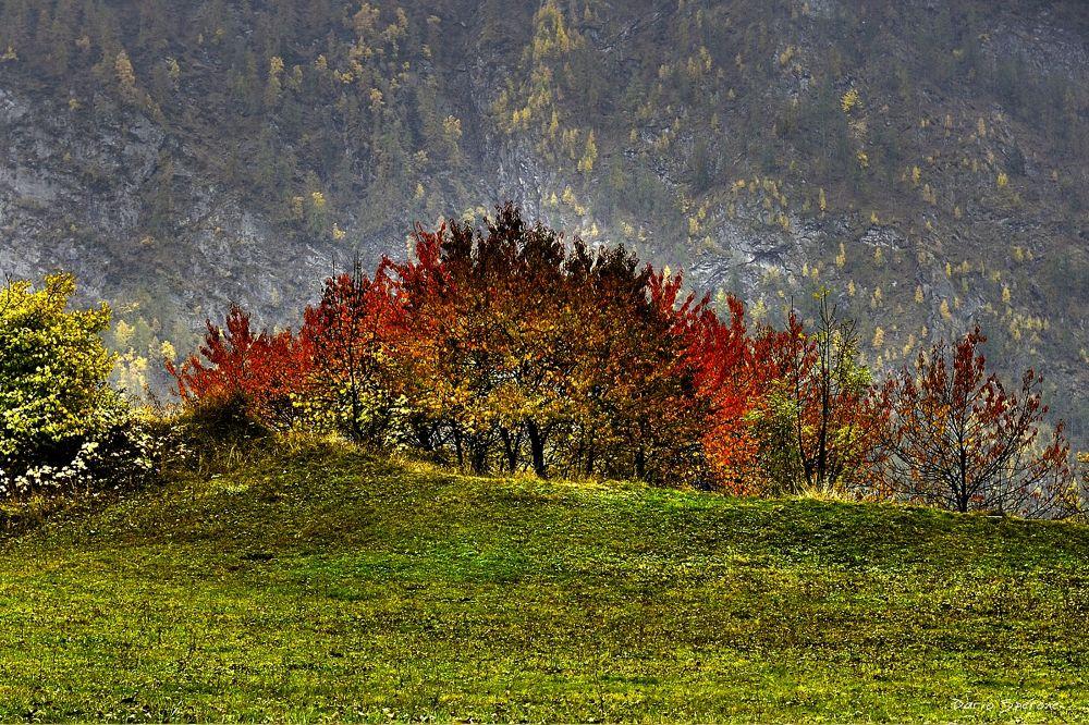Photo in HDRI #h.d.r. #alberi #nikon #natura #autunno #photography