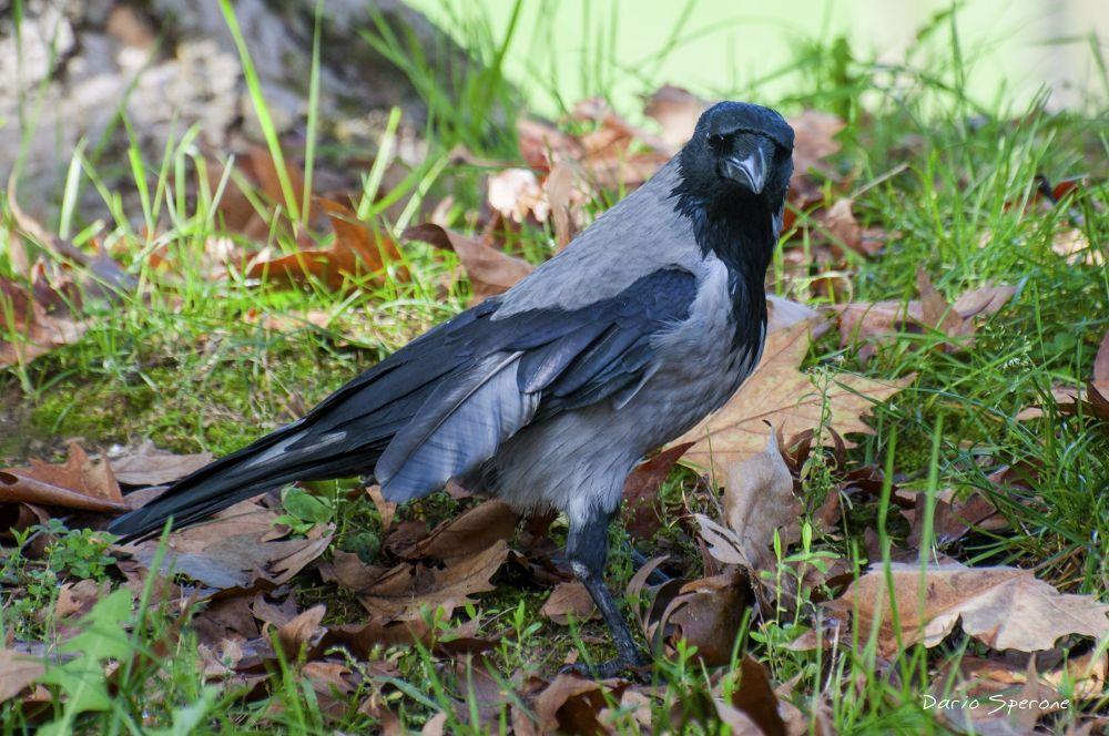 Photo in Animal #bird #nikon #nature