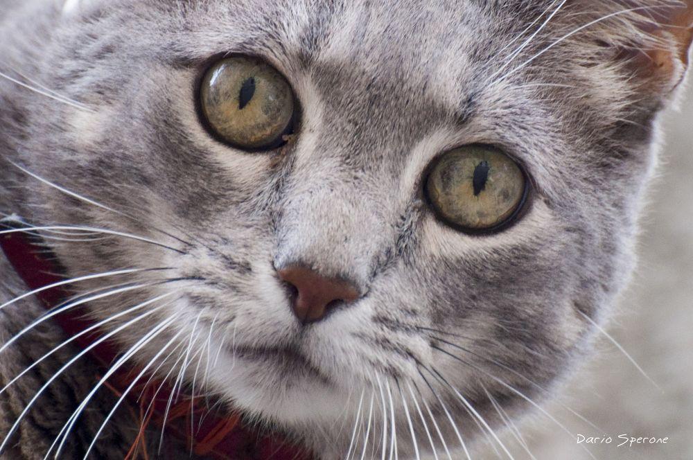 Photo in Animal #cat #pet #cute #nikon