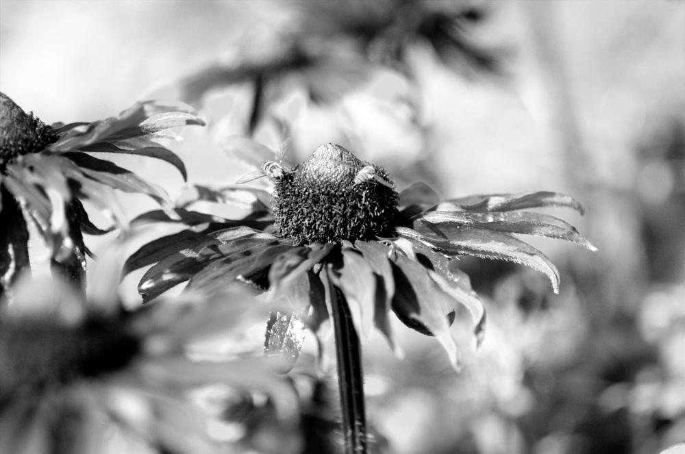 Photo in Macro #flowers #macro #nature