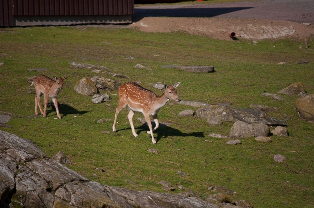 Photo in Random #rådjur #deers