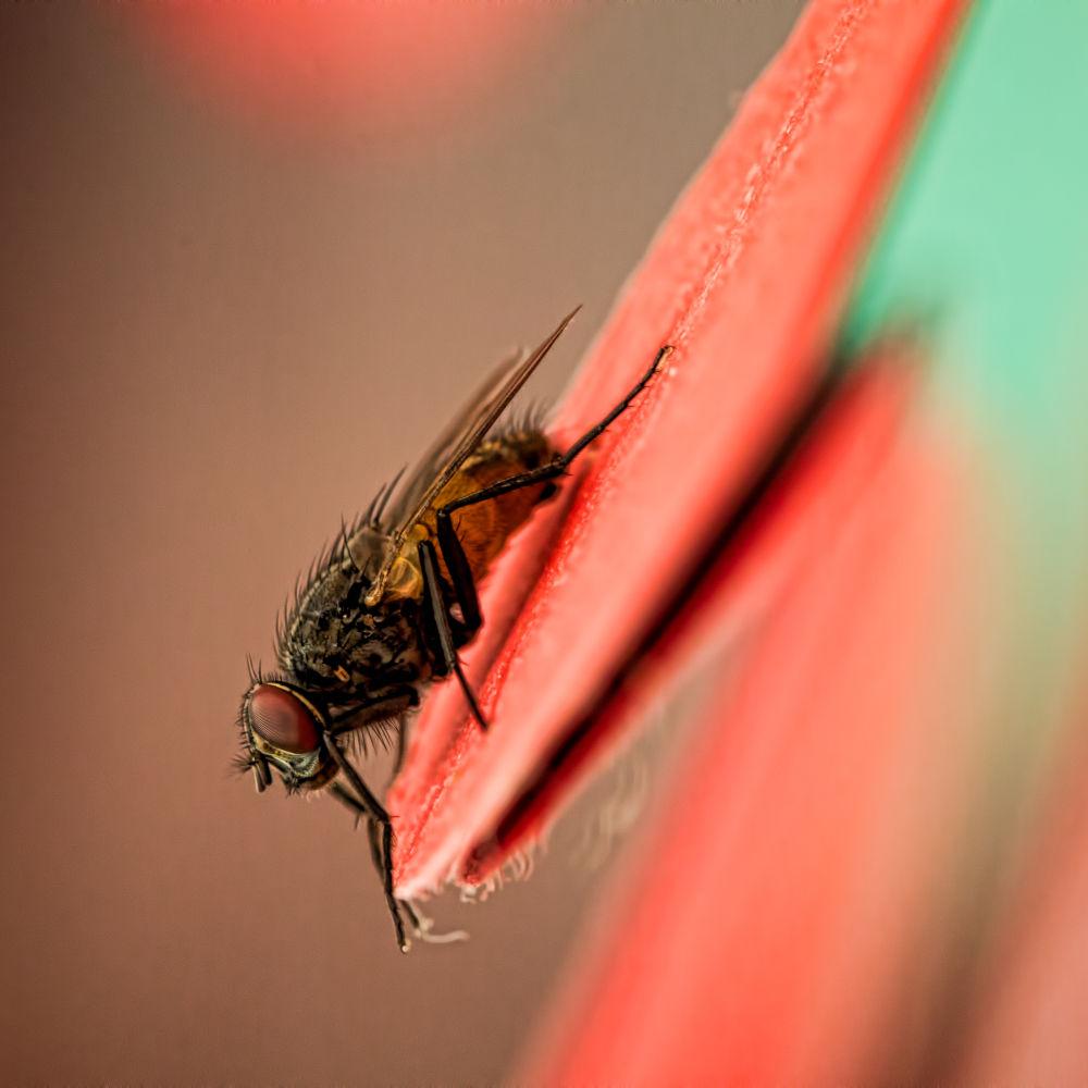 Photo in Macro #macro #fly #animal #color