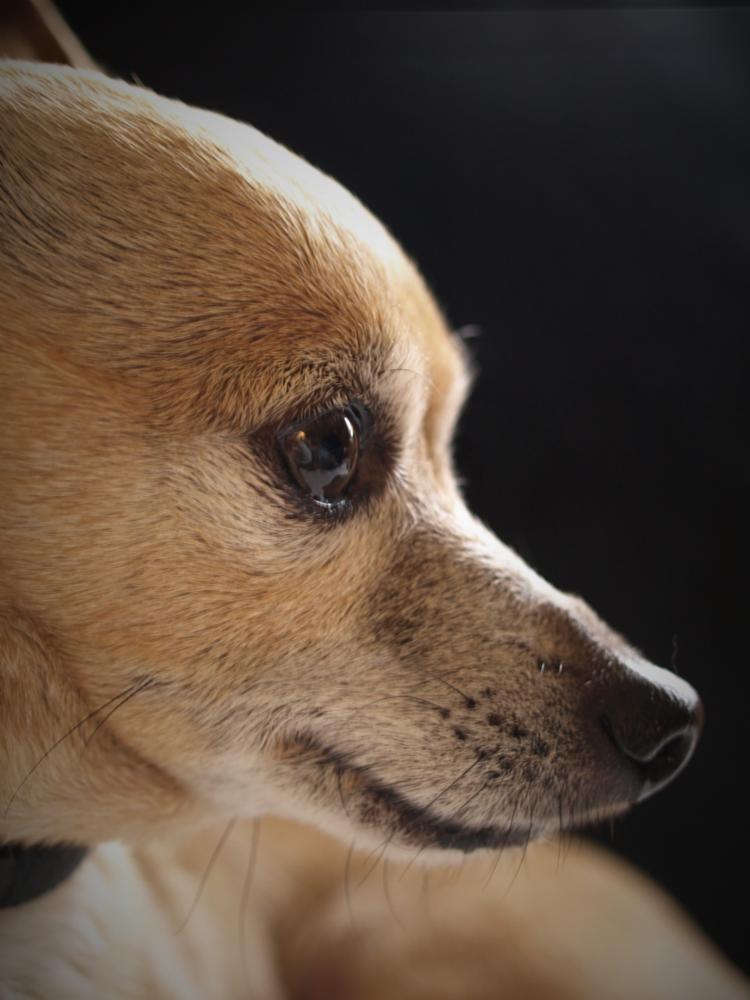 Photo in Animal #dog #old #animal #pet