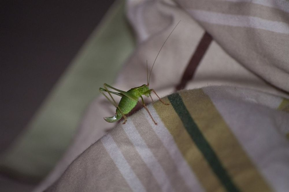 Photo in Random #green #bug