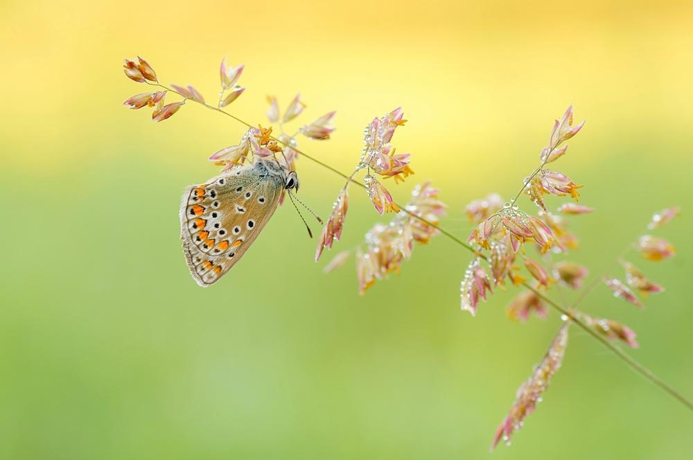 Photo in Macro #sony butterfly
