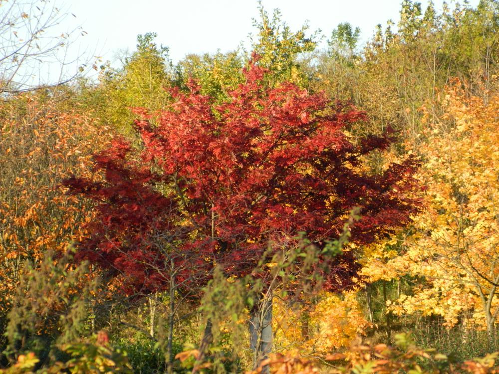 Photo in Random #autumn #colours #green #orange #red #brown