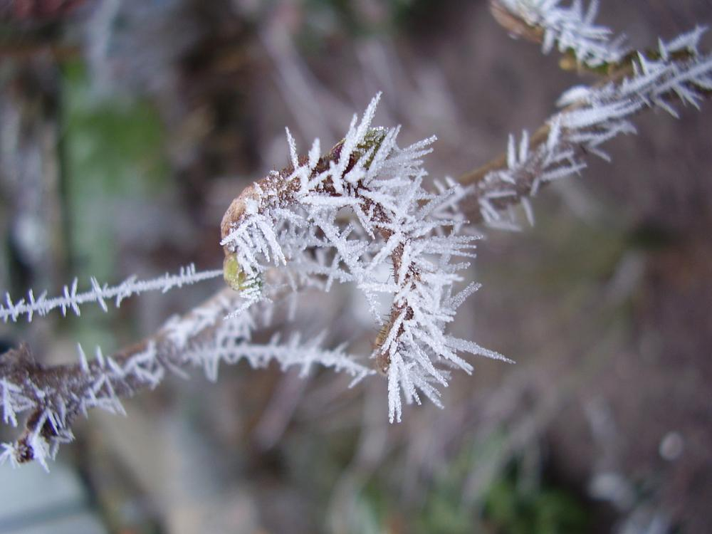 Photo in Nature #nature #garden #ice #cold #white #snow #weather