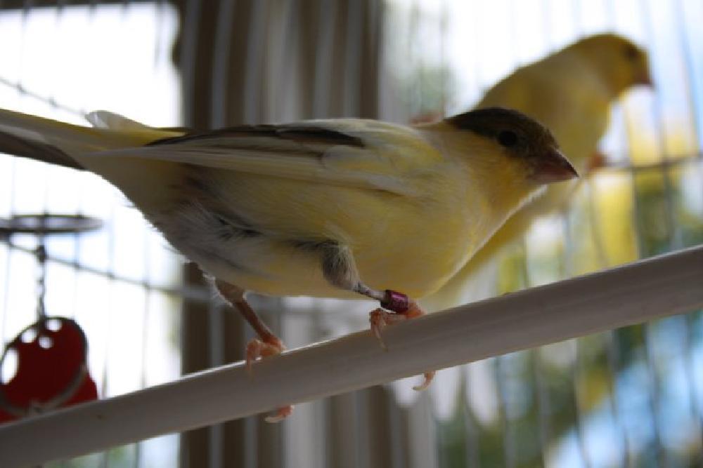 Photo in Animal #bird #animal #cage