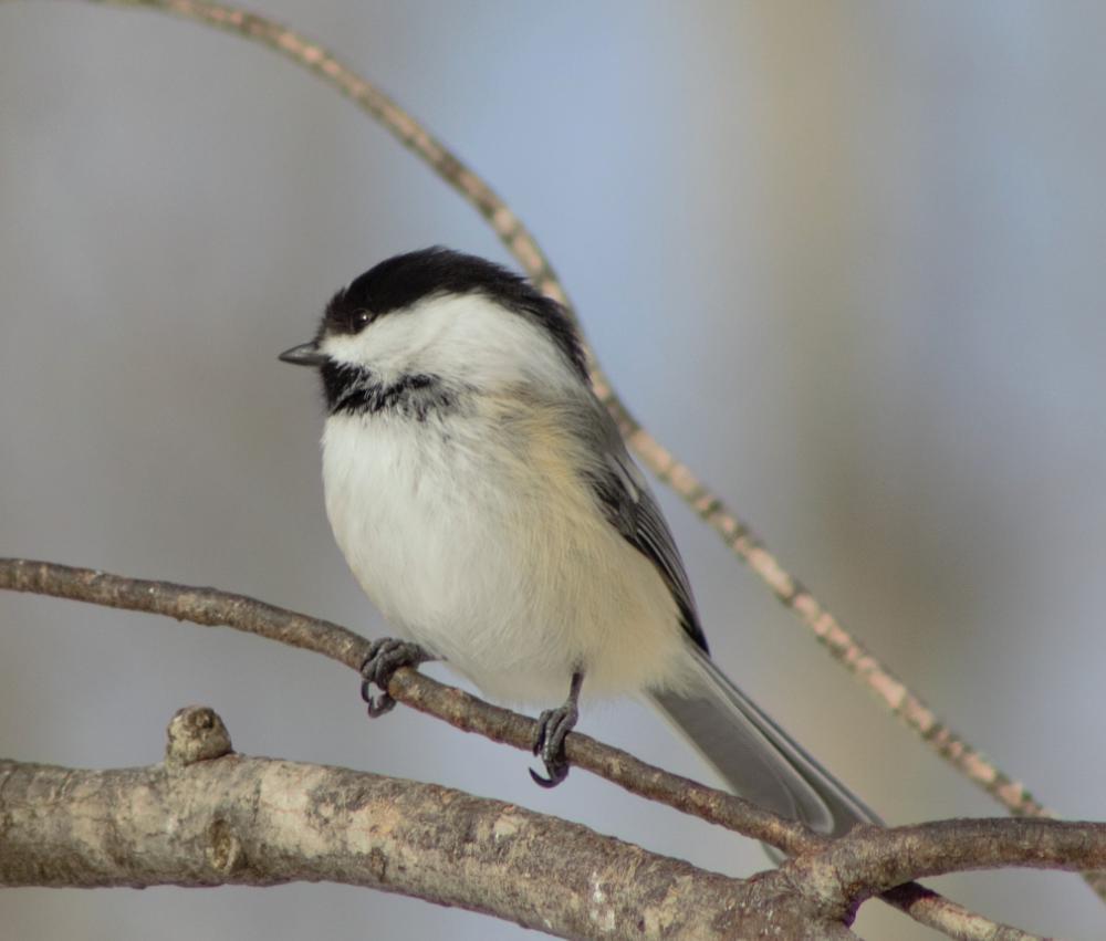 Photo in Animal #nature #birds #animals