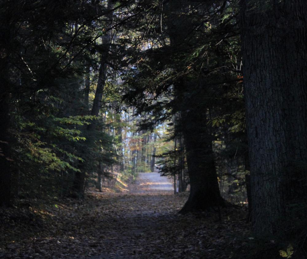Photo in Landscape #nature #forest #woods #landscape