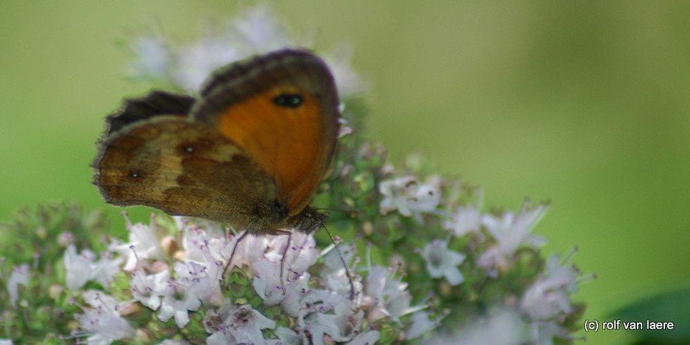Photo in Macro #butterfly #macro #flower